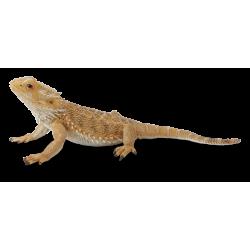 Barzdotasis drakonas (driežas) L