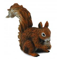 Ėdanti raudonoji voverė (s)