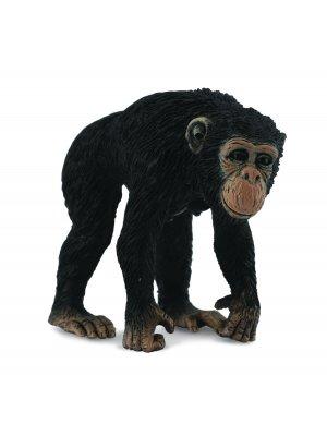 Patelė šimpanzės (m)