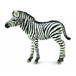 Zebras (M)