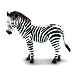 Zebras paprastasis (l)