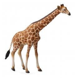 Žirafa tinklinė (xl)